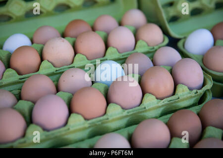Farm Fresh Organic Eggs - Stock Photo