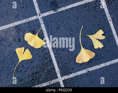 Beautiful gold and brown autumn ginkgo leaves fallen on stone path. - Stock Photo