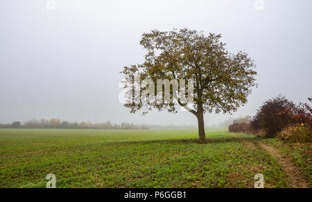 Autumn day in Germany, lonely tree standing in the field, hazy sky. - Stock Photo