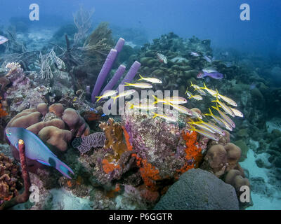 Coral reef in Carbiiean Sea - Stock Photo
