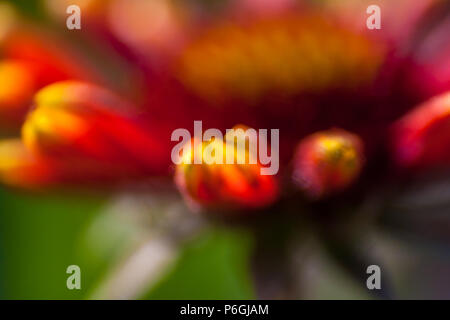 Blurred flower petals background in red yellow orange green - Stock Photo
