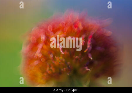 Blurred flower background in red green blue - Stock Photo