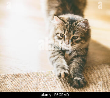 Fluffy kitten sharpens its claws - Stock Photo