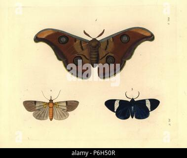 Tasar silkmoth, Antheraea mylitta (Saturnia mylitta) 1, specious tiger moth, Asota speciosa (Noctua? speciosa) 2, and Hypocrita pylotis (Callimorpha? pylotis) 3. Handcoloured lithograph from John O. Westwood's new edition of Dru Drury's 'Illustrations of Exotic Entomology,' Bohn, London, 1837. - Stock Photo
