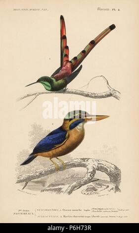 Red-tailed comet, Sappho sparganurus, and rufous-collared kingfisher, Actenoides concretus.Handcoloured engraving by Fournier after an illustration by Edouard Travies from Charles d'Orbigny's Dictionnaire Universel d'Histoire Naturelle (Dictionary of Natural History), Paris, 1849. - Stock Photo