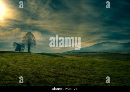 Tree in the Landscape with fog and field in front of and clouds on the sky with a sun in the bavarian forest - Stock Photo