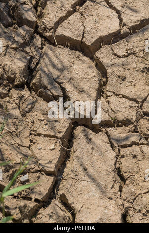 Dry water channel at field edge. Metaphor water shortage, German drought, possible famine, heatwave concept, heatwave crops, gardening in heatwave - Stock Photo