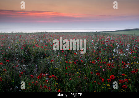 Sunset over field of poppies and wildflowers - Stock Photo