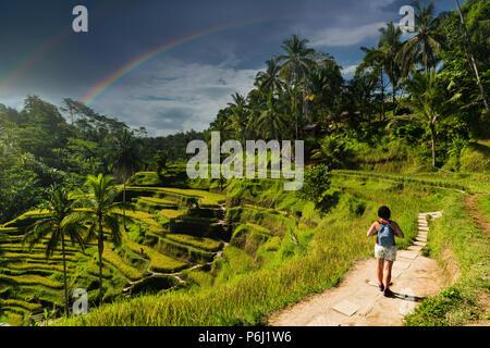 Tegalalang rice plantation terrace in Bali, Indonesia. - Stock Photo