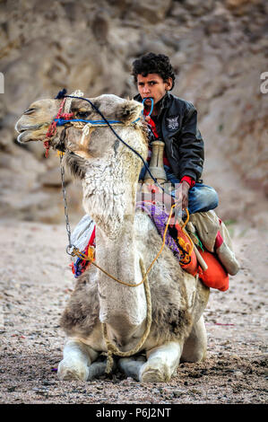 14 January 2011 - Egypt. Young Egyptian Bedouine boy sits on a resting camel in the desert. - Stock Photo