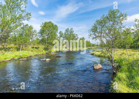 River flowing through a birch forest - Stock Photo