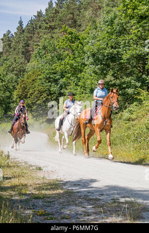 Horse riders on a forest trail, Wyre Forest, England, UK - Stock Photo