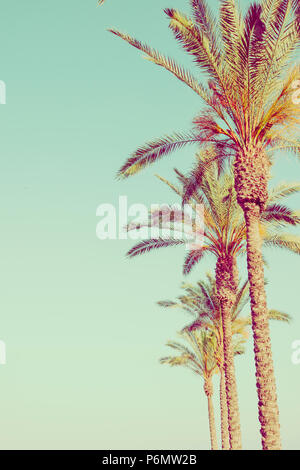 Row of Tall Palm Trees on Toned Light Turquoise Sky Background. 60s Vintage Style Copy Space for Text. Tropical Foliage. Seaside Ocean Beach Vacation. - Stock Photo