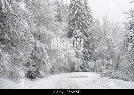 French Alps.  Snow covered fir trees in winter. Mountain road.  Saint-Gervais. France. - Stock Photo