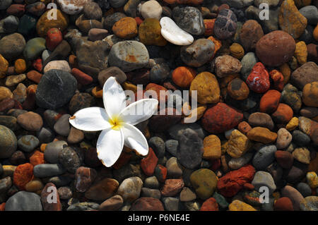 A White Tropical Flower floating on water above Colorful Pebbles - Stock Photo