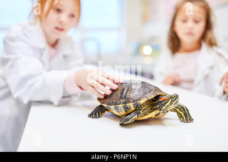 Pupils in elementary school teaching watching a turtle - Stock Photo