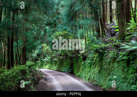 Path through the forest on Sao Miguel island, Azores, Portugal - Stock Photo