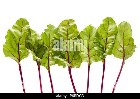 Fresh organic beetroot leaves, on white background - Stock Photo