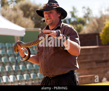 Danny from Red Desert Reptiles, displaying a Woma Python  at Yulara, Northern Territory, Australia - Stock Photo
