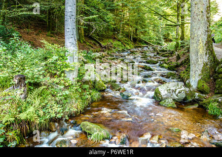 Rocky stream flowing through lush green woodland or forest in an alpine creek in a low angle view of the flowing water - Stock Photo