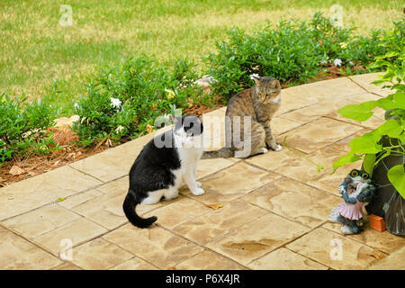 Grey tiger stripe domestic short hair tabby cat and a black and white tuxedo cat outdoors standing on a garden patio.