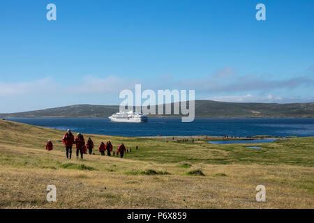 Expedition cruise ship passengers hiking at Grave Cove, West Falkland, Falkland Islands, with Le Lyrial in the background - Stock Photo