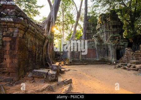Ta Prohm temple (Rajavihara), Angkor, UNESCO World Heritage Site, Siem Reap Province, Cambodia - Stock Photo