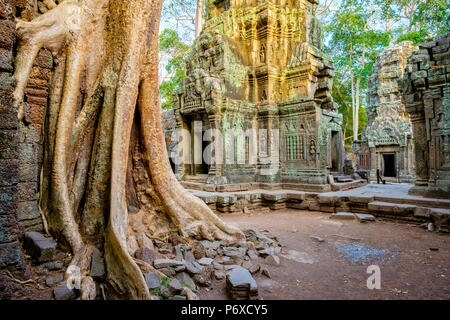 Ta Prohm temple ruins, Angkor, UNESCO World Heritage Site, Siem Reap Province, Cambodia - Stock Photo