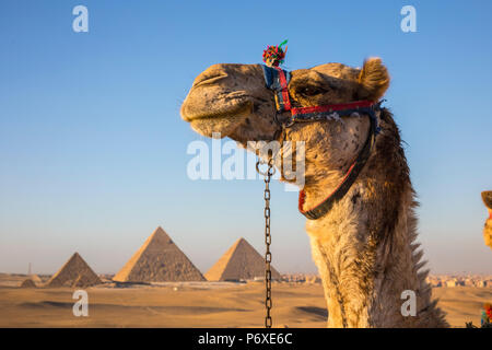 Pyramids of Giza, Giza, Cairo, Egypt - Stock Photo