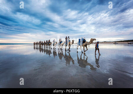 Cable Beach, Western Australia. Camels on the shore at sunset - Stock Photo