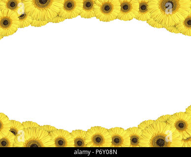 Yellow gerbera flowers create a frame on white background - Stock Photo