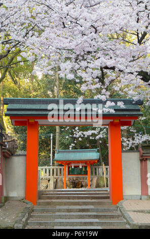 Cherry blossom at Ichinomiya shrine, Kobe, Kansai, Japan - Stock Photo