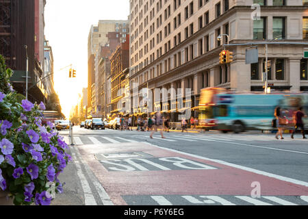 New York City tour bus driving down 5th Avenue in Manhattan with people walking through the intersection and the sunset in the background - Stock Photo
