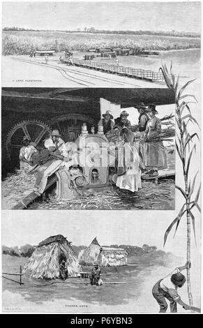 Engravied montage of the sugar industry near Mackay, Queensland, Australia. From top, harvesting and transporting cane, crushing cane, huts for kanaka slaves. From the Picturesque Atlas of Australasia Vol 2, 1886 - Stock Photo