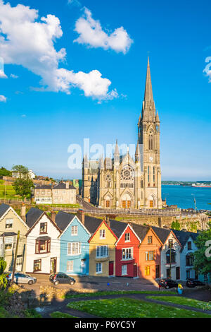 Cobh, County Cork, Munster province, Ireland, Europe. Colored houses in front of the St. Colman's cathedral. - Stock Photo