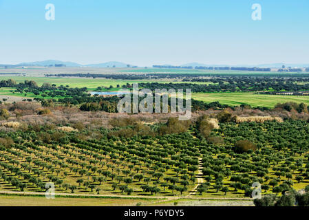 The vast plains of Alentejo and Spain with farms, olive trees and cork trees. Portugal - Stock Photo