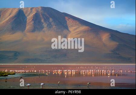 Laguna Colorada or Red Lagoon with uncountable flamingos, the salt lake on the altiplano plateau of Bolivia