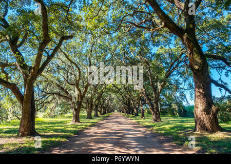 United States, Louisiana, St. John the Baptist Parish. Evergreen Plantation road lined with southern live oak (Quercus virginiana) trees. - Stock Photo