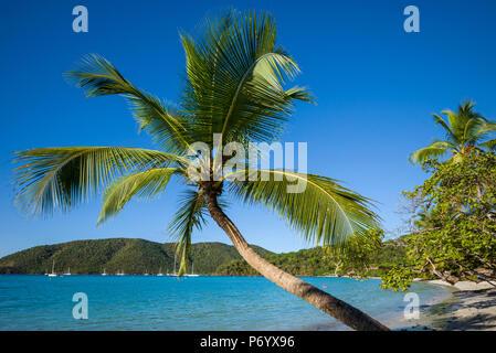 U.S. Virgin Islands, St. John, Trunk Bay, Trunk Bay Beach - Stock Photo
