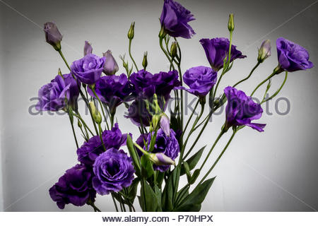 A bouquet of Lisianthus Purple flowers - Stock Photo
