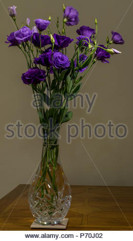 A bouquet of Lisianthus Purple flowers in a cut-glass crystal vase - Stock Photo