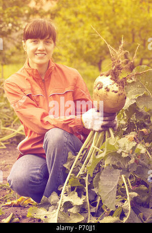 young woman  harvesting rutabaga in field - Stock Photo