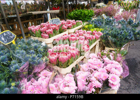 Columbia Road Flower Market, a very popular Sunday market between Hoxton and Bethnal Green in East London, London, England, United Kingdom, Europe - Stock Photo