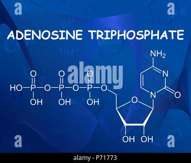 Adenosine triphosphate chemical formula. Vector illustration. Formula beautiful blue background. - Stock Photo