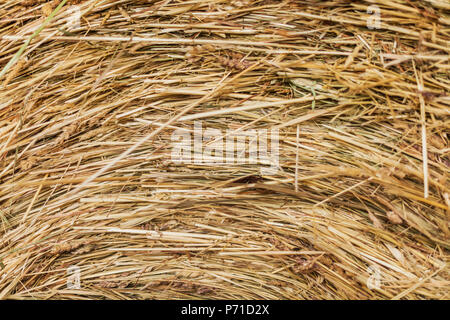 Texture of dry hay forage for livestock - Stock Photo