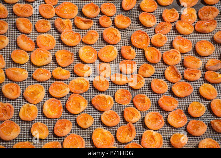 Close Up of Apricots Drying on Rack - Stock Photo
