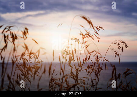 Tall grass stalks closeup against setting sun over sunset lake and sky - Stock Photo