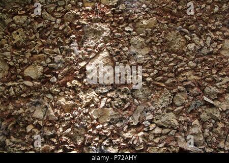 Shell stone texture. background shell rock - Stock Photo