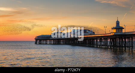 Starling murmuration, Blackpool Pier at sunset, Lancashire, England, United Kingdom, Europe - Stock Photo