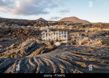 Sunset at lava formation landscape with bushes, La Restinga, El Hierro, Canary Islands, Spain - Stock Photo